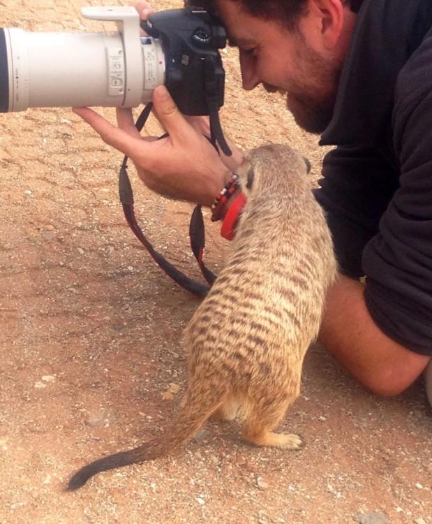 John n meerkat
